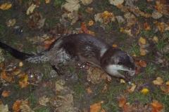 Herbstferien im Forsthaus Rohanov 2006
